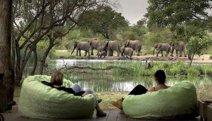 View of elephants
